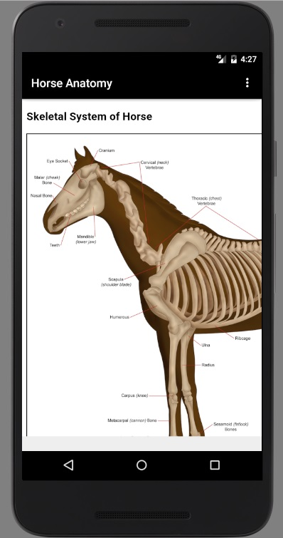 Horse Anatomy Diagrams : Equine Anatomy - 马解剖学:骨学[Android][$1.49→0]